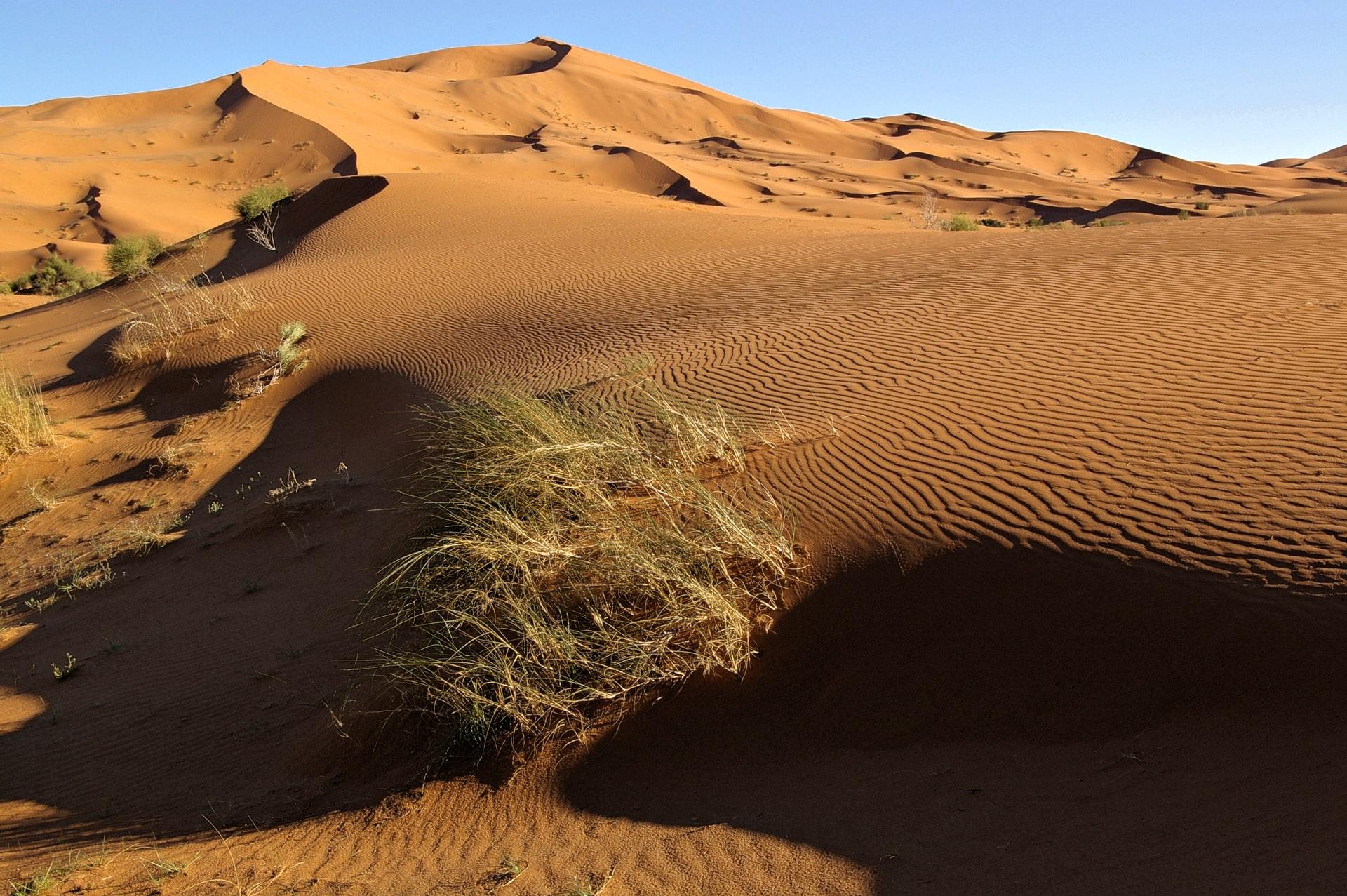 Rallye du Maroc 2021 : nouveau défi pour David Castera